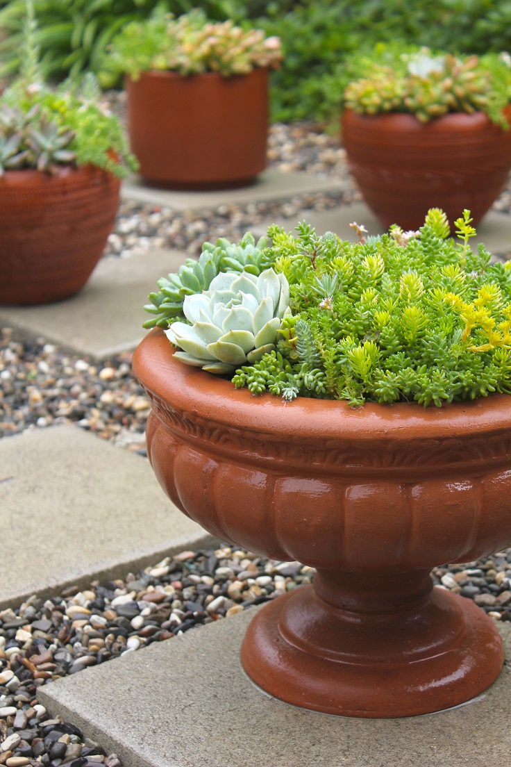 Top 10 diy outdoor succulent garden ideas top inspired Planters for succulents