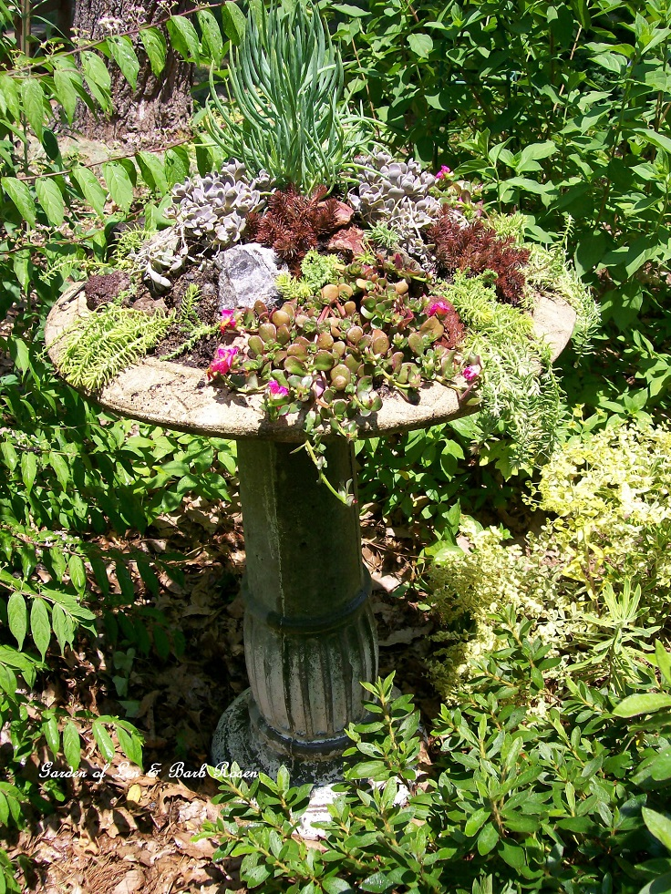 Create-your-own-succulent-garden-birdbath