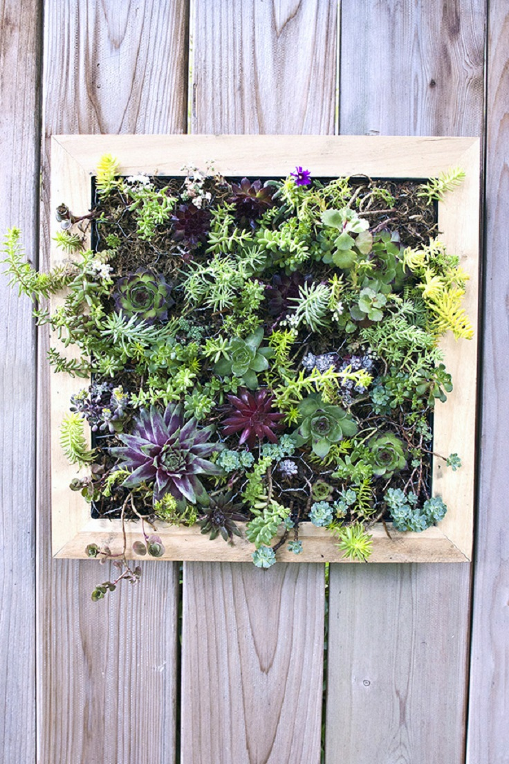 Top 10 diy outdoor succulent garden ideas top inspired for Ideas for your garden