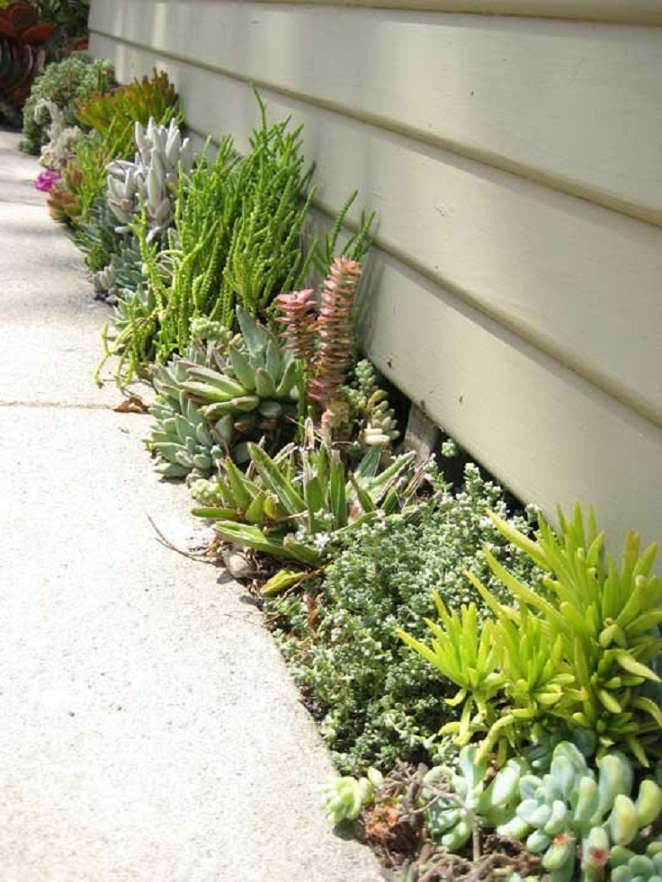 Succulents Garden Ideas 50 ways of creating an enchanted succulent garden in your backyard Top 10 Diy Outdoor Succulent Garden Ideas Top Inspired