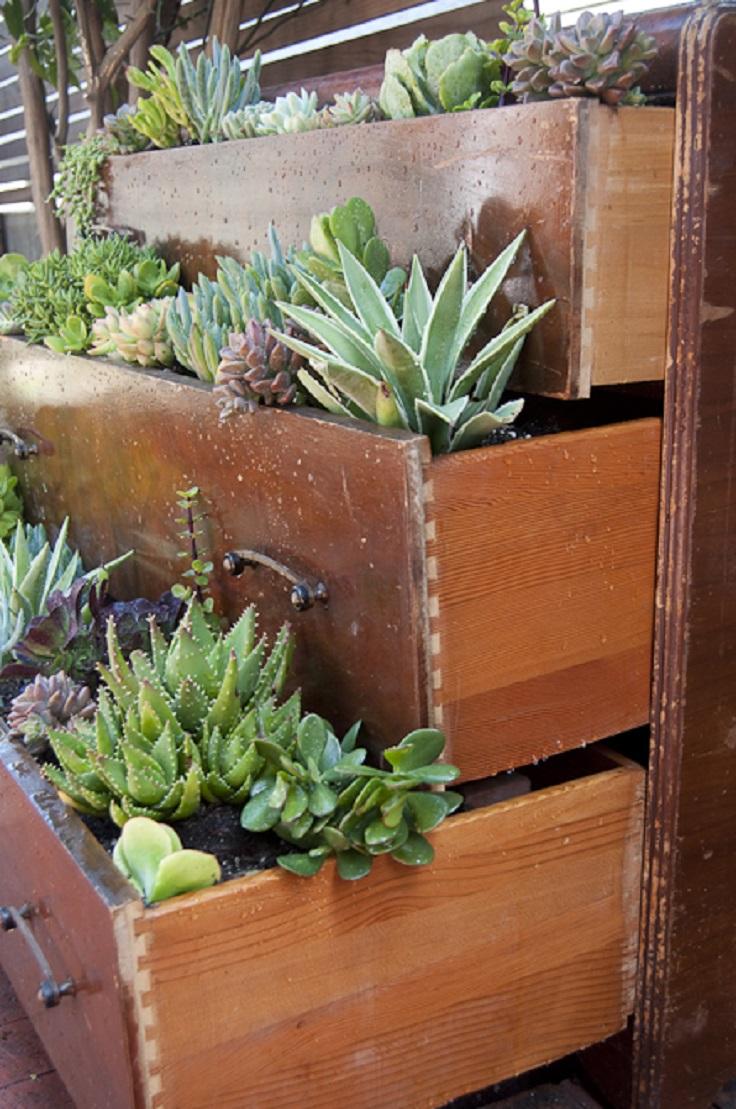 Succulent-Dresser
