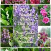 TOP 10 Scented Plants That Will Make Your Garden a Fragrant Paradise | Top Inspired