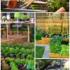 TOP 10 Tips on Starting Your Own Vegetable Garden | Top Inspired