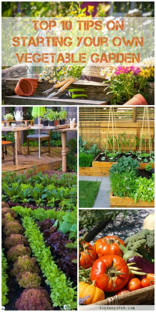 Vegetable Garden - TOP 10 Tips on Starting Your Own [2018 ...