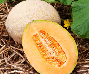 Top 10 Tips and Advice on How to Grow Cantaloupes