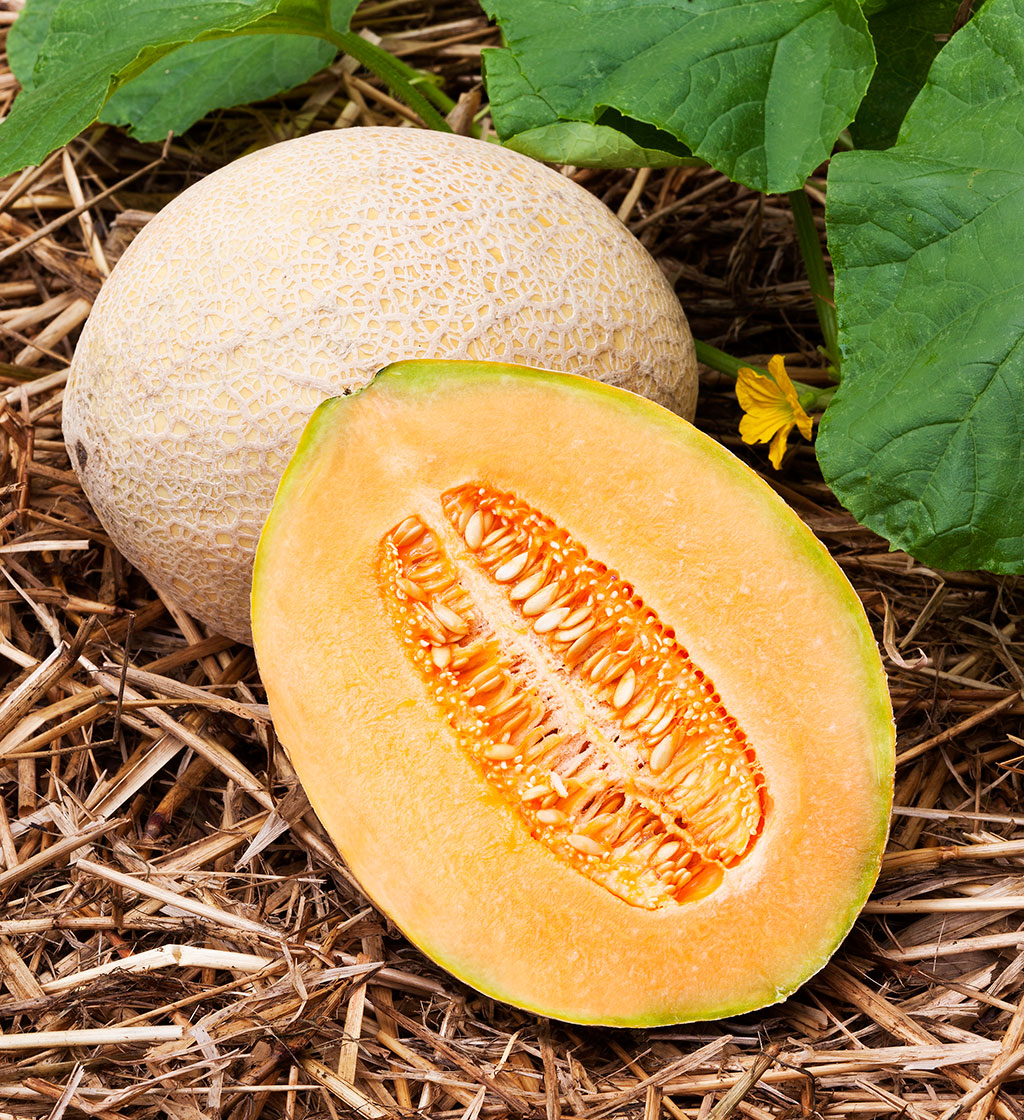 TOP 10 Tips and Advice on How to Grow Cantaloupes | Top Inspired