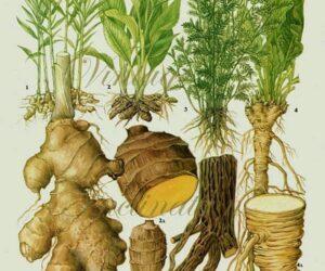 Top 10 Healing Ayurvedic Spices