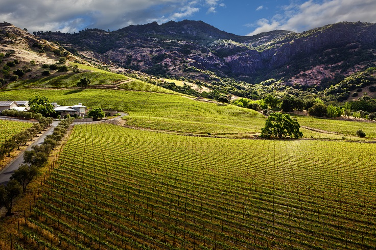 Top 10 Best Vineyards In Napa Valley To Visit