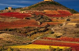 TOP 10 Wine Tasting Destinations in Europe | Top Inspired