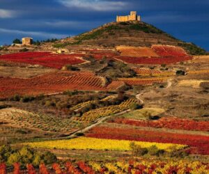 Top 10 Wine Tasting Destinations in Europe