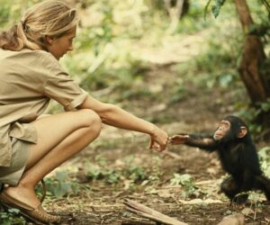 Top 10 Things To Know About Jane Goodall