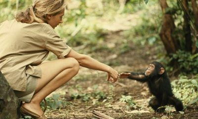TOP 10 Things to know about Jane Goodall   Top Inspired