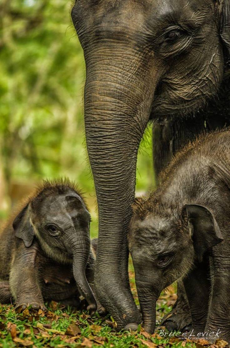 top-10-elefant