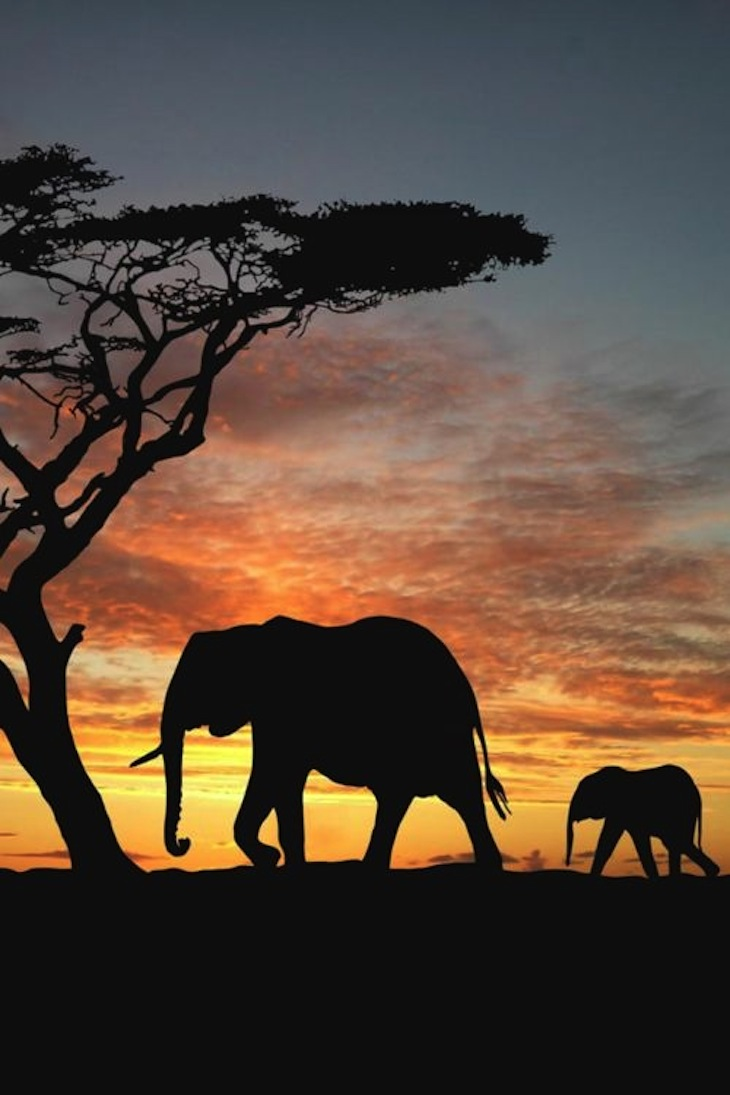 TOP 10 Differences Between African and Asian Elephants