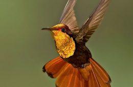 TOP 10 Best Birdwatching Spots around the World | Top Inspired