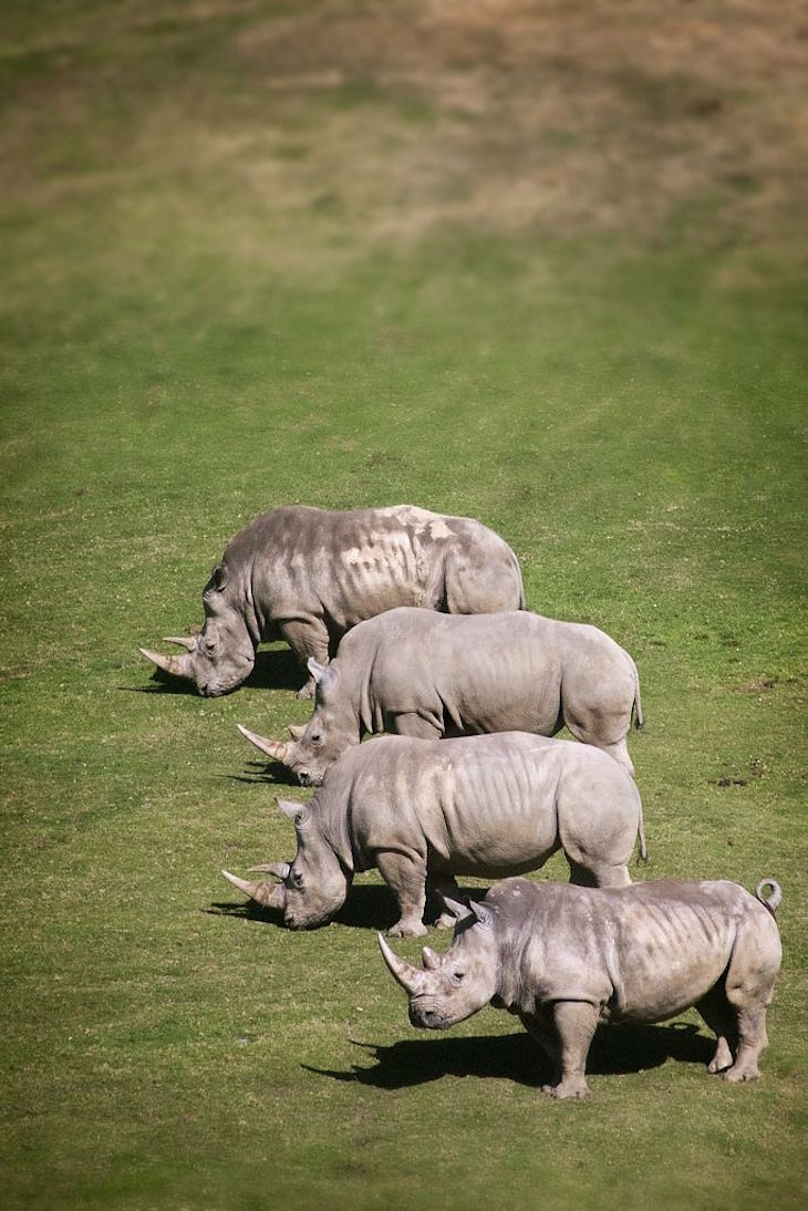 TOP 10 Differences Between the 5 Rhino Species