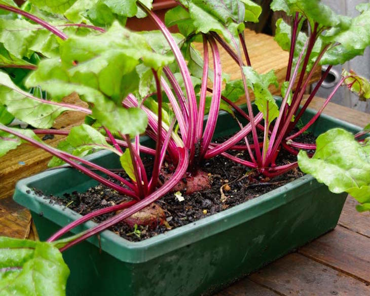 container vegetable gardening top 10 best vegetable crops for pots top inspired