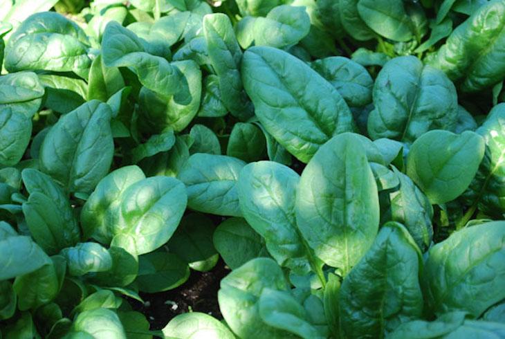 TOP 10 Best Vegetable Crops for Pots