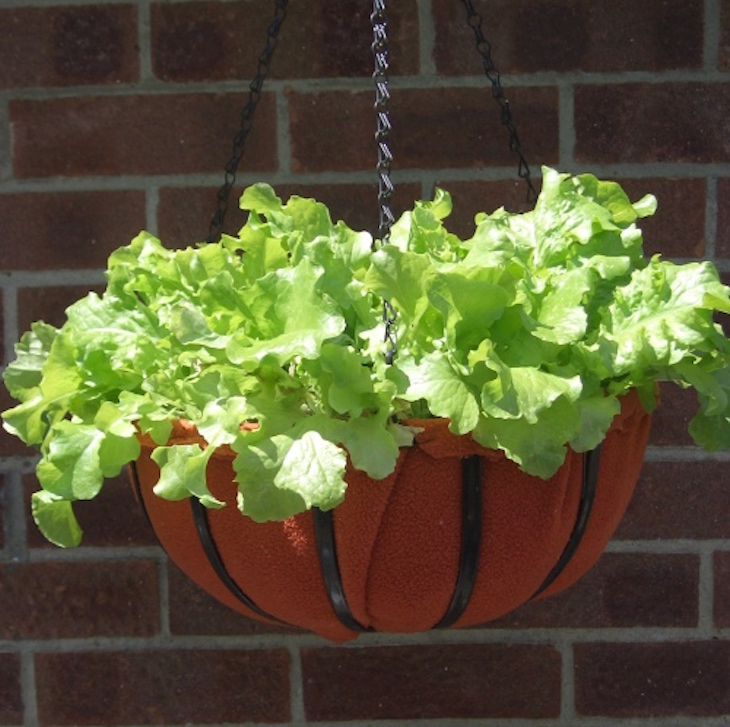 10 Ways To Style Your Very Own Vegetable Garden: 10 BEST VEGETABLES TO GROW IN CONTAINERS