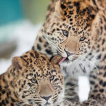 10 Critically Endangered Species Threatened by Humans | Top Inspired