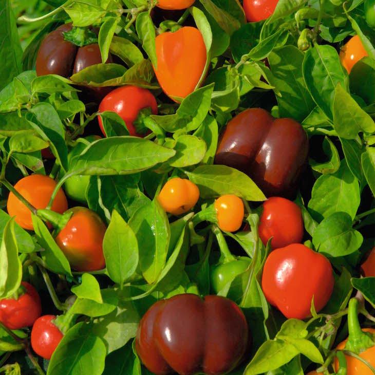 TOP 10 Miniature Vegetables to Grow in Pots