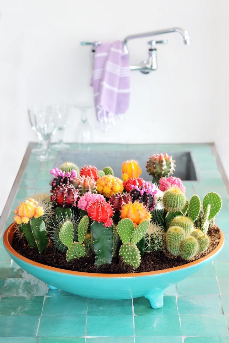 topH-Corp-Comm-Pers-Persberichten-PERSBERICHTEN-2012-Woonplant-vd-Maand-2012-juni-06-Cactus08_bc3dc8ab