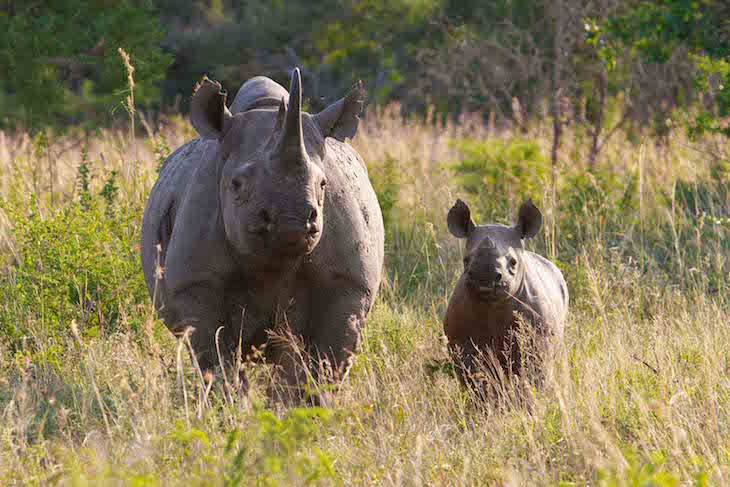 Animals Facing Extinction: 10 Critically Endangered Species