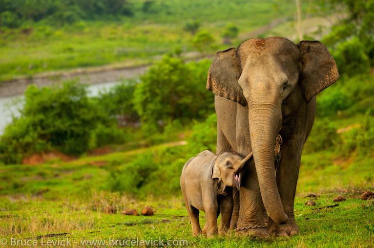 Animals Facing Extinction: 10 Critically Endangered ...