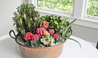 TOP 10 Beautiful Cactus Gardens for the Black Thumb | Top Inspired