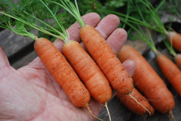 topgrowing-carrots-babette2-lg