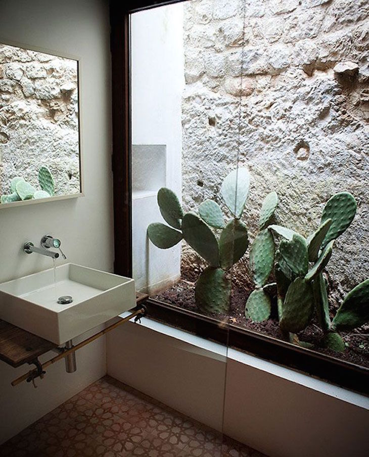 ... Garden Design With TOP Beautiful Cactus Gardens For The Black Thumb  With Lemon Grass Plant From
