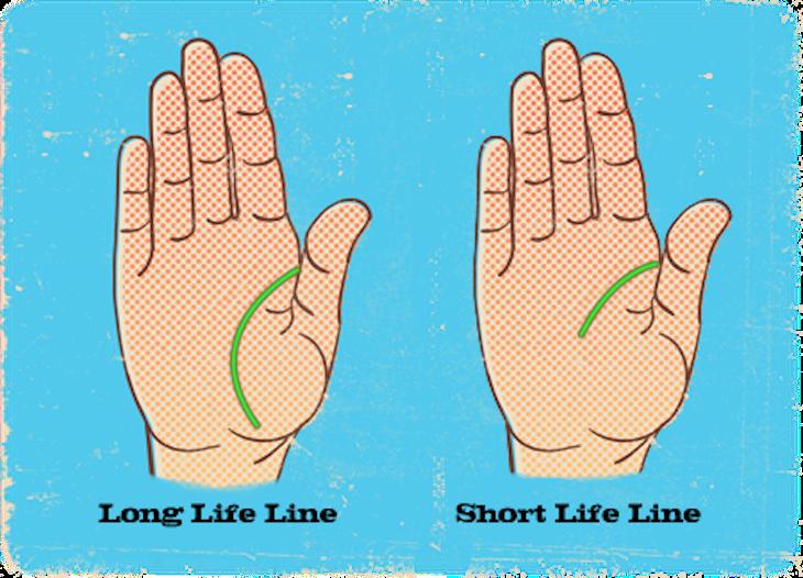 toplife_line_short1