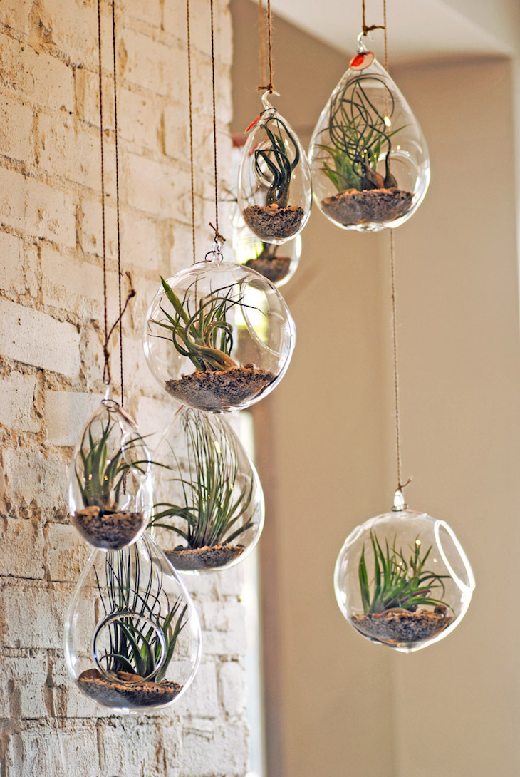 Air plant decor top 10 beautiful ideas top inspired for Air plant decoration