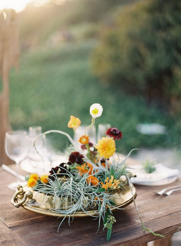 Air Plant Decor - TOP 10 Beautiful Ideas - Top Inspired