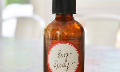 TOP 10 Homemade Natural Bug Repellents | Top Inspired