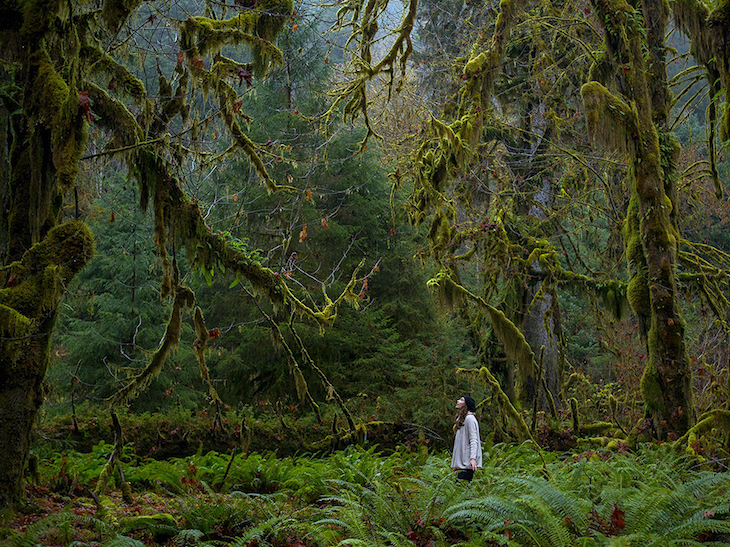 toptrees-olympic-national-park_77892_990x742