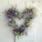 TOP 10 Beautiful Air Plant Decorations | Top Inspired