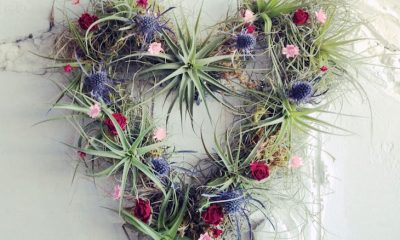 TOP 10 Beautiful Air Plant Decorations   Top Inspired