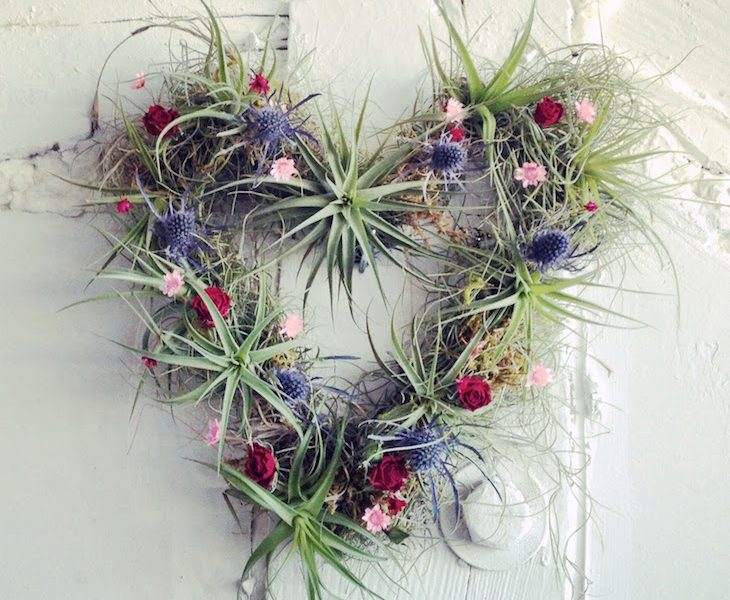 Top 10 beautiful air plant decorations top inspired for Air plant art