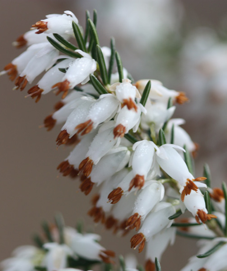 Winter plants images galleries with a - Winter flowers for balcony ...