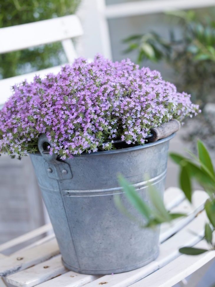 Top 10 winter plants to brighten up your balcony top - Winter flowers for balcony ...