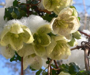 Top 10 Winter Plants To Brighten Up Your Balcony