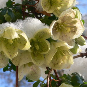 TOP 10 Winter Plants To Brighten Up Your Balcony | Top Inspired