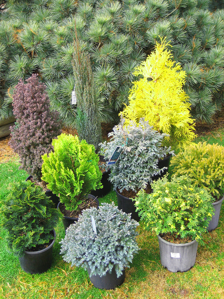 Top 10 winter plants to brighten up your balcony top for Slow growing trees for front yard