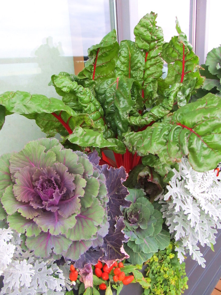 topswiss-chard-container
