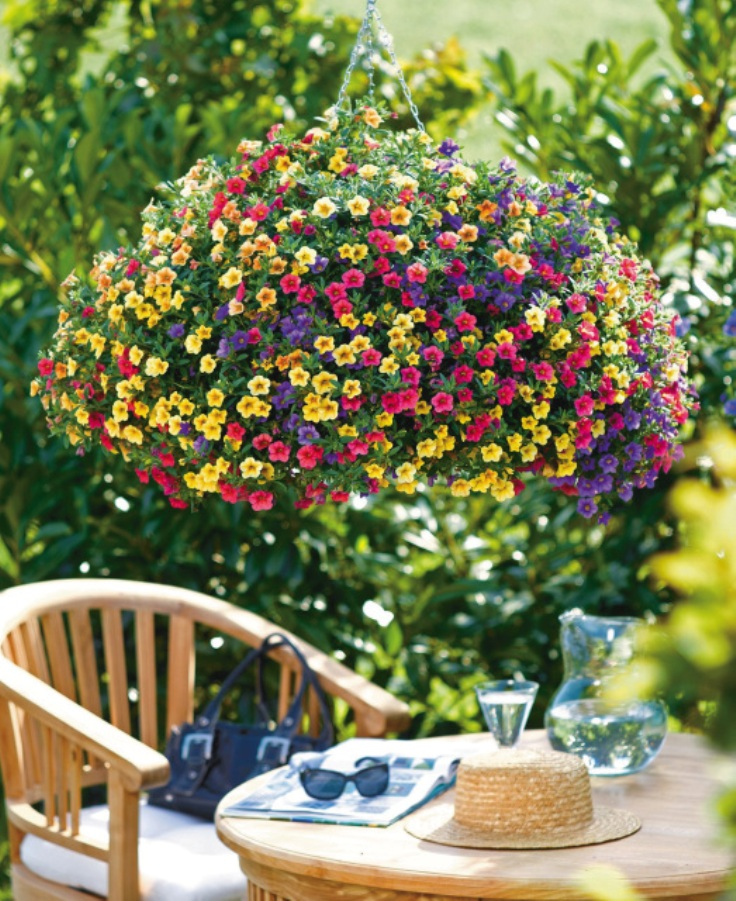 Best Flowers For Winter Hanging Baskets Uk : Top plants for stunning hanging baskets inspired