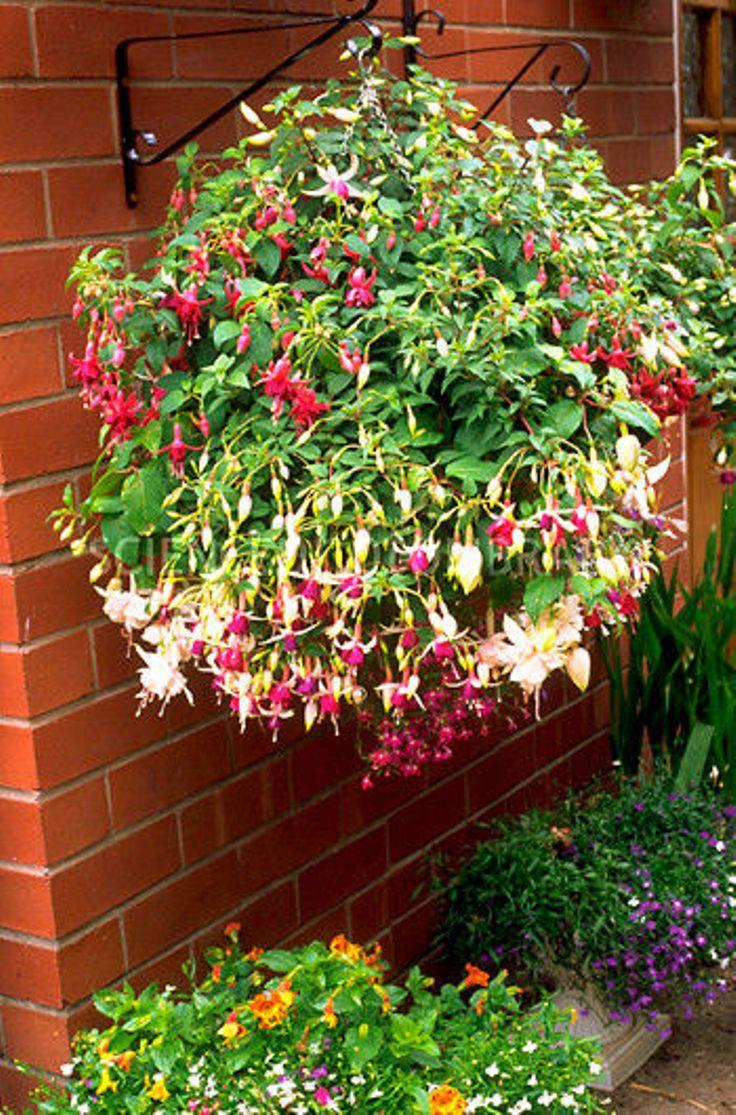 Flower Varieties For Hanging Baskets : Top plants for stunning hanging baskets inspired