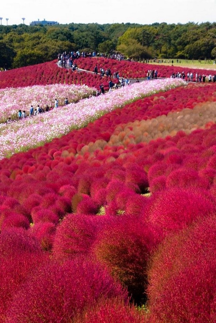 Top 10 Beautiful Places In Japan For Nature Lovers Top Inspired