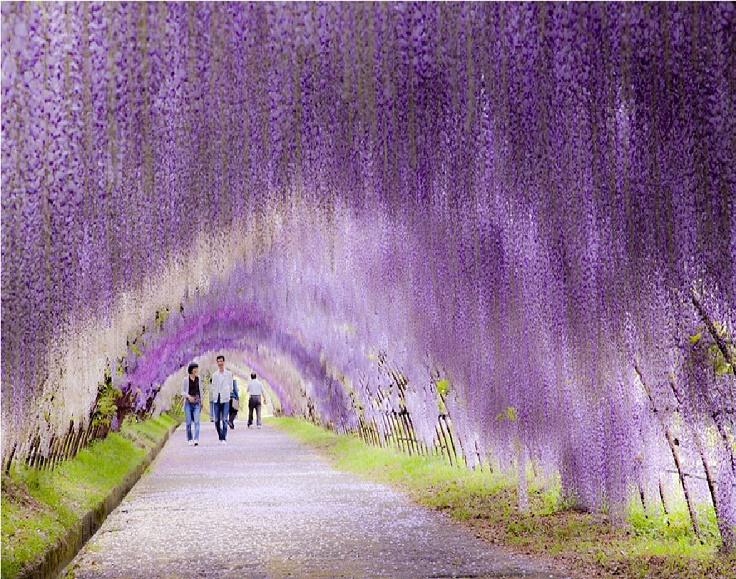 Kawachi-Fuji-Garden