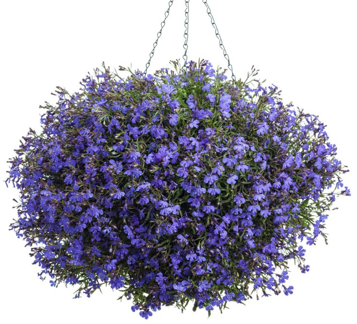 Best Flower Combinations For Hanging Baskets : Top plants for stunning hanging baskets inspired